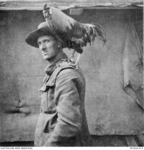 Walter Farrell of the 2nd Divisional Signals Company with unit mascot Jack, France, 1917. Jack was a better guard than a dog; he attacked any stranger who entered the unit lines. Image courtesy Australian War Memorial.