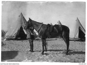 Major General Sir William Throsby Bridges and his mount, Sandy, at Mena, Egypt, in 1915. Sandy was the only Australian horse to return from WWI. Image courtesy Australian War Memorial.