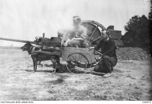 Roff, a German message dog captured by the 13th Battalion near Villers-Bretonneux in May 1918. Roff's name was changed to Digger; his stuffed and mounted skin is now in the Australian War Memorial's collection. Image courtesy Australian War Memorial.