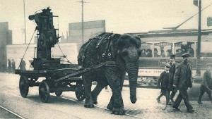A military elephant in World War I pulls ammunition in Sheffield. Image courtesy Illustrated War News.