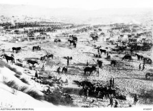 Australian Light Horse units bivouaced at Rakwa after the Maghara operations, Sinai, 15 October 1916. Image courtesy Australian War Memorial.